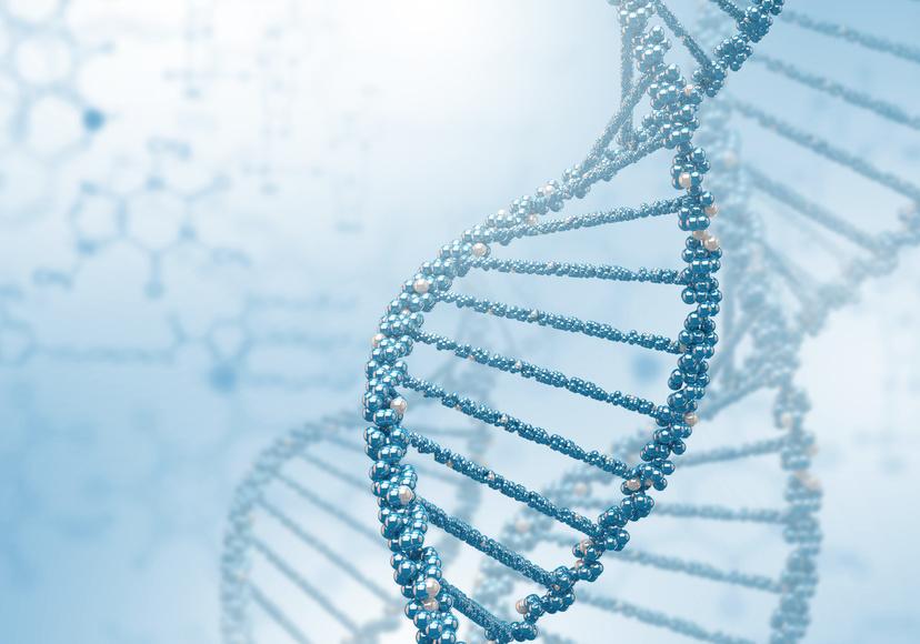 DNA עוברי ניפטי NIFTY